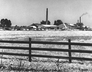 The Sacramento Brick Co. brickyard is shown in this 1938 photograph. Bricks manufactured at this now-defunct Riverside-Pocket area business were used in the construction of such famous Sacramento buildings as the Memorial Auditorium, the Elks Building at 11th and J streets and the Cathedral of the Blessed Sacrament. (Photo courtesy of PHCS)