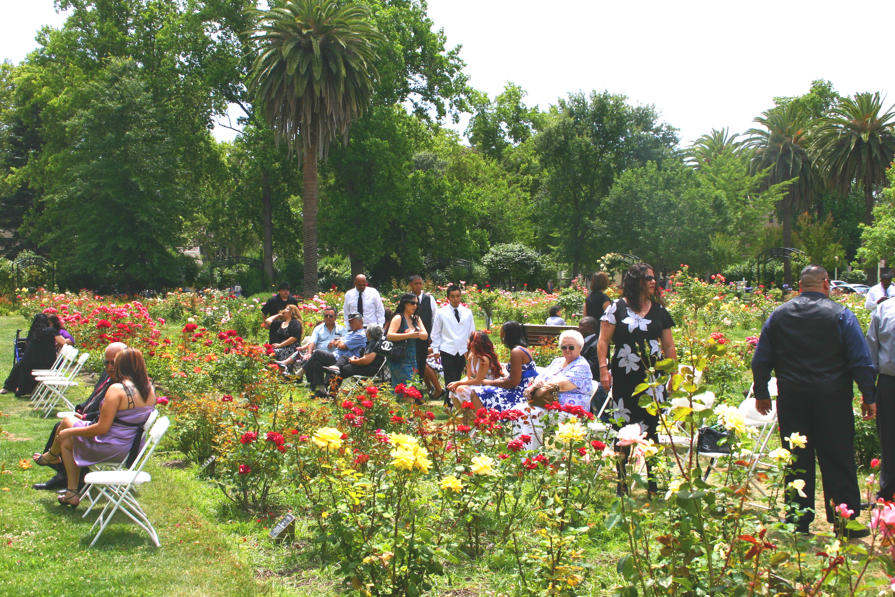 East Sacramentou0027s McKinley Park Rose Garden Draws Many Daily Visitors, As  Well As Visitors For
