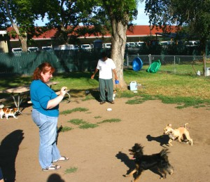 A popular feature of Carmichael Park is its one-acre, off-leash dog park. / Valley Community Newspapers photo, Lance Armstrong