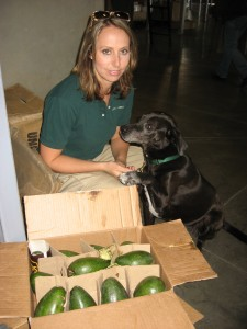 Handler Jennifer Berger and Tassie, a Lab mix, worked throughout the region, sniffing out dangerous agricultural pests and illegal shipments of non-native snakes and fish.