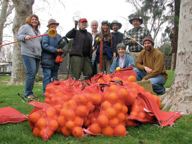 There is nothing like the feeling that comes from doing good. These volunteers know these oranges will go to help local families in need. / Photo courtesy Soil Born Farms