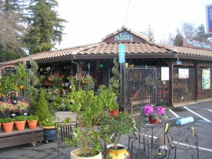 Pietro Talini's Nursery and Garden Center is located at 5601 Folsom Blvd. / Valley Community Newspapers photo, Susan Laird