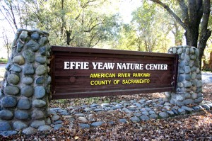 The Effie Yeaw Nature Center in Ancil Hoffman Park will soon celebrate its 35th anniversary. / Valley Community Newspapers photo, Lance Armstrong