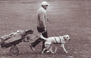 Chris Fulster, Sr. takes a walk with his caddie, a golden retriever, named Tiny, in this 1976 scene at William Land Park. The dog-powered golf cart was one of Chris Fulster, Sr.'s many inventions.  / Photo courtesy, Fulster Family