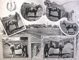 Photographs of notable Rancho del Paso horses surround a late 19th century scene of the rancho's horse breeding farm. / Photo public domain