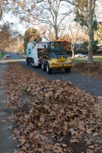 OVER 27 THOUSAND TONS of leaves are collected by Sacramento's yard waste collection staff. / Photo courtesy, Steve Harriman