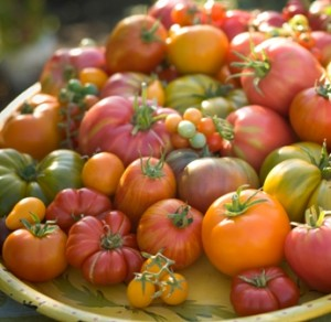 "HEIRLOOM TOMATOES are Sacramento favorites. Sacramento's unique growing climate is ideal for tomatoes. Hence, the Capital City's nickname, ""Sacra-tomato."" / Photo iStockphoto"