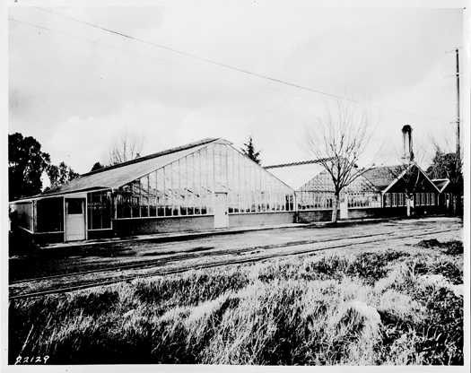 Greenhouses at East Lawn Nursery are shown in this historic photograph. Photo courtesy of East Lawn Memorial Park