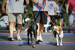 A pet-friendly 5K is offered as a part of the prestigious seventh annual Fab 40's 5K Run/Walk set for July 26. Photo courtesy