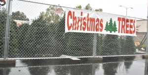 The Christmas tree lot on the corner of Riverside Boulevard and Florin Road is currently operated by new folks this year, Pocket native Gregg Jones (whose father owns Ace Hardware) and his friend Chad. They enjoy the comforts of home inside their trailer. Photo by Monica Stark