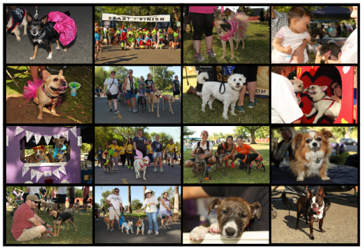 Photos from the Doggie Dash