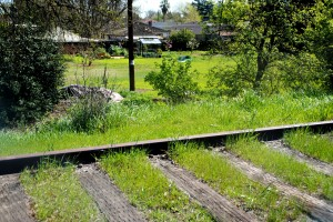 Photo by Monica Stark This bit of natural beauty surrounds the old railroad tracks, owned by Regional Transit, between Sutterville Road and Fruitridge Road/Seamas Avenue. Many people enjoy walking in the serenity of this greenbelt, which has been saved from the once-proposed notion that trains would run from Old Sacramento to Hood. State Parks had to ditch the section shown here because they don't own the land, RT does. RT has no current plans to sell it either.